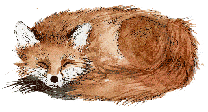 Sleeping Brown Fox
